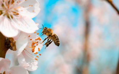 Avoir des abeilles chez soi, mode d'emploi