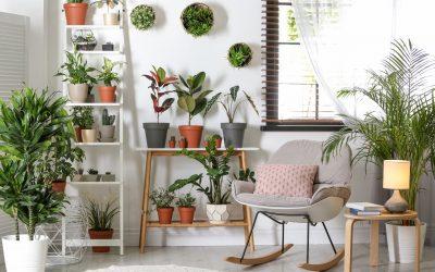 Meilleures plantes dépolluantes à mettre chez soi