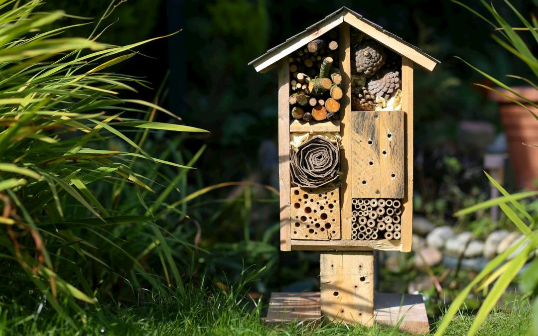 Hôtels à insectes : qu'est-ce que c'est et pourquoi en mettre dans son jardin ?