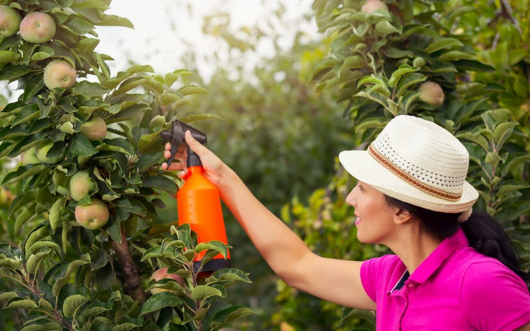 Quels sont les meilleurs désherbants naturels efficaces pour un beau jardin ?