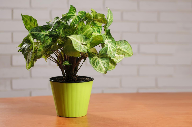 meilleure plante depolluante