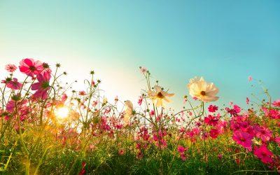 Inspiration pour l'été : les plus belles des fleurs à mettre dans son jardin