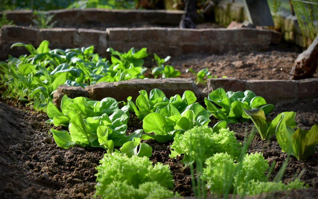 Les meilleurs légumes à faire pousser à l'ombre dans son jardin