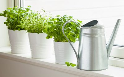Quels aromates faire pousser en intérieur, et comment ?