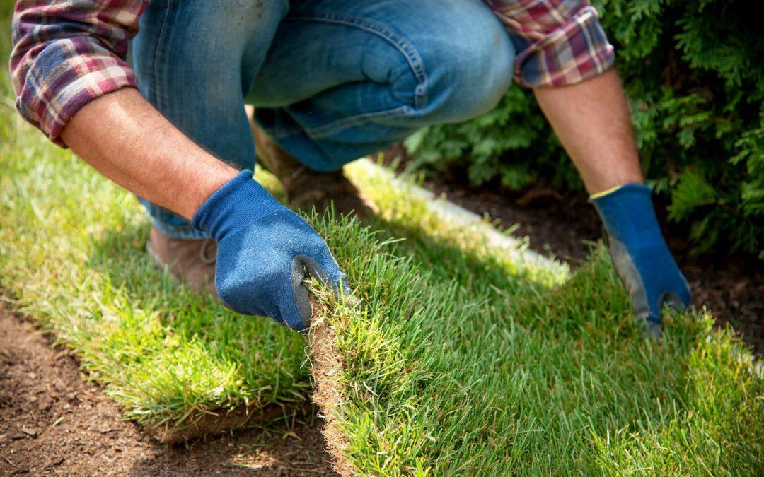 Comment planter son propre gazon dans son jardin ?