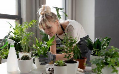 Des idées pour créer un sublime jardin d'intérieur