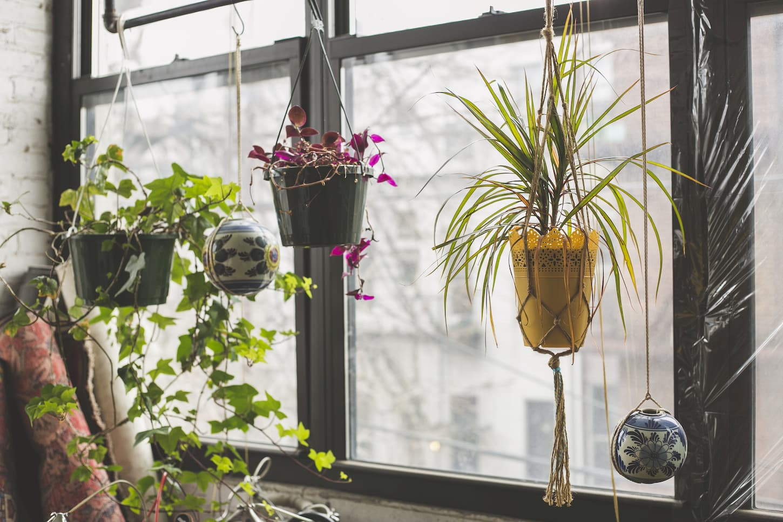 idées de jardin d'intérieur