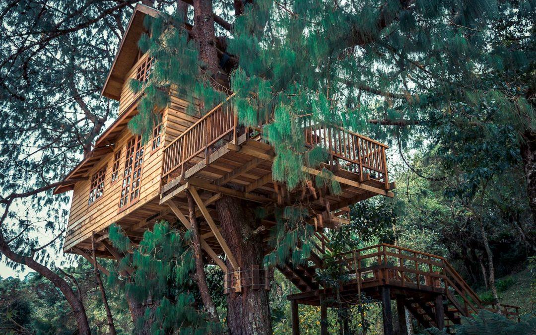 4 activités ludiques quand on vit proche d'une forêt