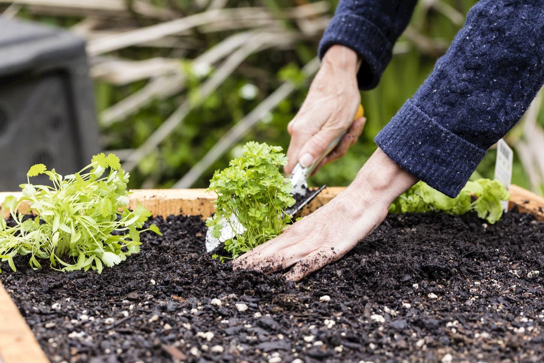 comment faire un jardin suspendu