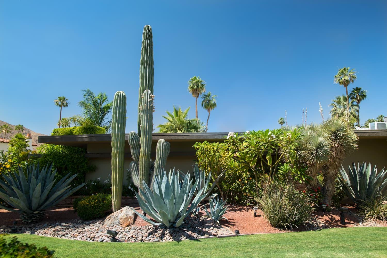 cactus exterieur jardin