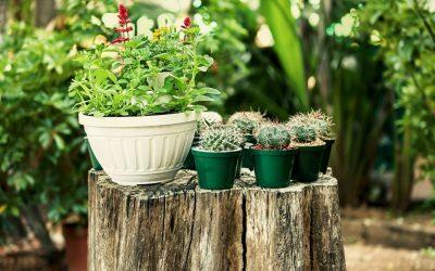 Guide complet du cactus : un air de désert dans son jardin