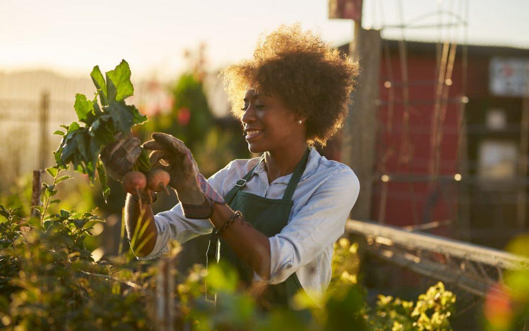 Le guide du jardinier débutant de A à Z pour un premier jardin réussi