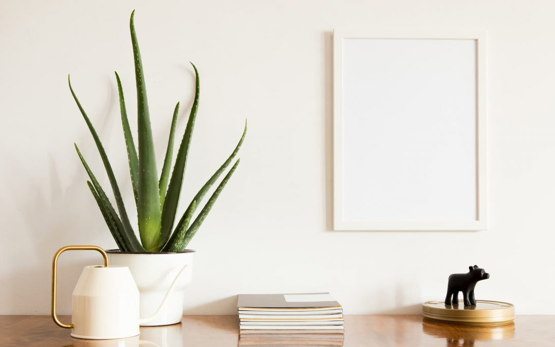 6 conseils d'entretien pour votre Aloe Vera