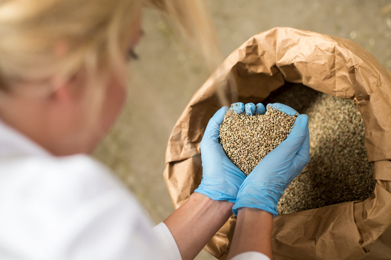 types de graines cbd